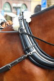 Collar on a horse hitching up Royalty Free Stock Photography