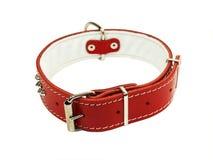 Collar para el perro Imagen de archivo libre de regalías