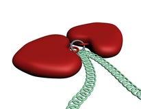 Collar rojo de dos corazones Foto de archivo libre de regalías