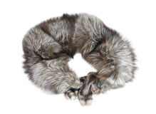 Collar of silver fox Stock Photos