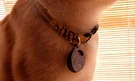 Collar & tag photos for website feedback Royalty Free Stock Images