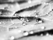 Collard Green bedeckte im wasser- Makro Stockfotos