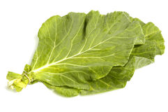 Collard Greens Stock Photo