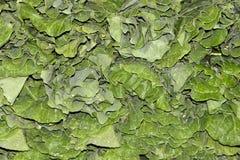 Collard greens Stock Image