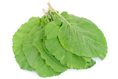 Collard Greens Royalty Free Stock Photography