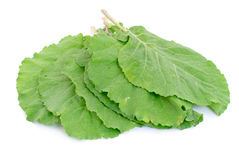 Collard Greens Royalty Free Stock Image