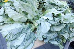 Collard Greens. Fresh leafy collard greens for sale in the outdoor farm market stock images