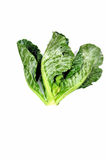 Collards. Collard greens isolate on white background Stock Photos