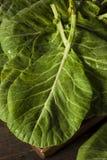 Collard Greens verde orgánico crudo Fotos de archivo libres de regalías