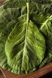 Collard Greens verde orgánico crudo Fotografía de archivo