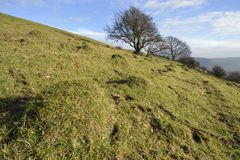 Collard Hill Stock Images