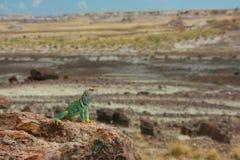 Collard lizard Stock Image