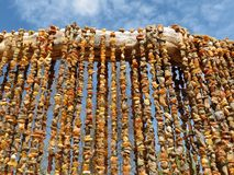 Collare ambrato Fotografie Stock Libere da Diritti