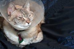 Collare da portare del cono del gatto Fotografia Stock