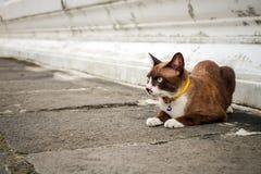 Collare del gatto di Brown, giallo immagine stock libera da diritti
