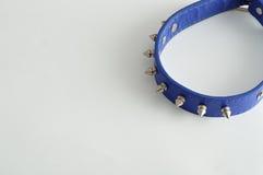 Collare di cane blu decorato con le punte Fotografia Stock