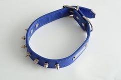 Collare di cane blu decorato con le punte Fotografie Stock
