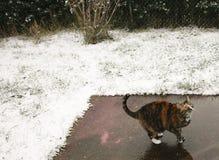Collared Cat Looking Up in de Sneeuw royalty-vrije stock foto