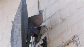 Collared huis van de duivenvestiging met nest achter satellietschotel stock videobeelden