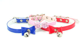 Collars for pets Stock Images