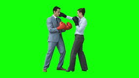 Colleagues boxing in slow motion stock video footage