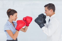 Colleagues in competition having a boxing match. In bright office Stock Photos