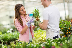 Colleagues  trimming a plant in hothouse Stock Images