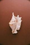 Collecion раковины взморья Стоковое Изображение RF
