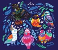 Collecion экзотических австралийских птиц и тропических листьев иллюстрация вектора