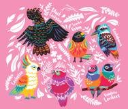 Collecion экзотических австралийских птиц и тропических листьев на розовой предпосылке иллюстрация штока