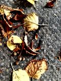 Collect autumn leaves in one place 2.  Royalty Free Stock Photos