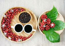 Collect of cafe, bean, cup of coffee, leaf, flower Royalty Free Stock Photos