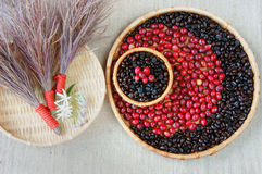 Collect of cofee bean,  ripe berries, black roasted Royalty Free Stock Images