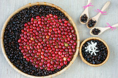 Collect of cofee bean,  ripe berries, black roasted Royalty Free Stock Photo