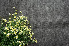 Collect flowers florist. A bouquet of wild flowers. White camomile. Medicinal plant.  royalty free stock images