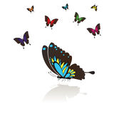 Collect of many colored Butterflies Stock Image