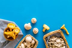 Collect mushroom concept. Champignons, oysters, chanterelles in basket on blue background top view copy space. Collect mushroom concept. Champignons, oysters royalty free stock image