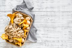 Collect mushroom concept. Champignons, oysters, chanterelles in basket on grey wooden background top view copy space. Collect mushroom concept. Champignons royalty free stock image
