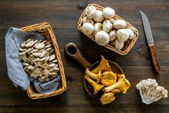 Collect mushroom concept. Champignons, oysters, chanterelles in basket near knife on dark wooden background top view.  royalty free stock photography