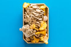 Collect mushroom concept. Champignons, oysters, chanterelles in tray on blue background top view space for text. Collect mushroom concept. Champignons, oysters royalty free stock image