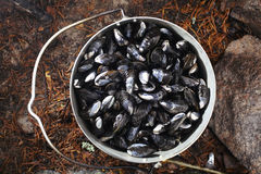 Collect and prepare mussels Stock Photography