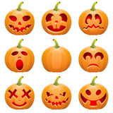 Collect Pumpkin for Halloween Stock Image