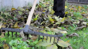 Collect rake leaves stock footage