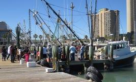 Collecte au bateau de crevette Image libre de droits