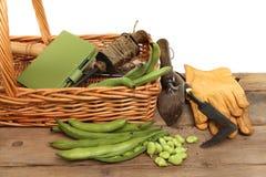 Collecte de fève Image stock