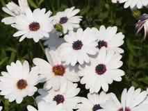 Collecte de fleurs Images libres de droits