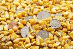 Collecte de maïs d'argent comptant Photo stock