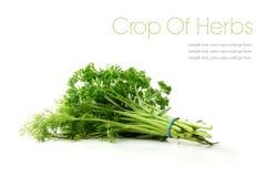 Collecte des herbes Images stock