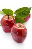Collecte riche de pomme photographie stock