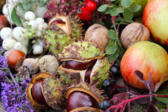 Collected autumn fruits Royalty Free Stock Photo
